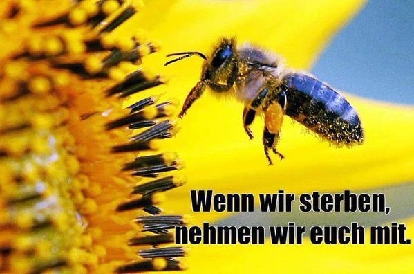 Jetzt ist es endgültig klar: Neonicotinoide verwirren die Bienen, worauf sie ihre Arbeit vernachlässigen.