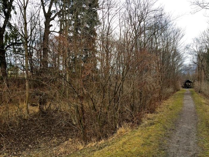 Dieser Auwald wird vermutlich dem Bau des Autobahnzubringers Hall Ost zum Opfer fallen.