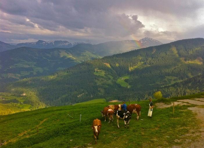 Die Almen in Tirol sind uraltes Kulturland.