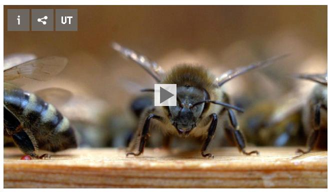 Klartext über das Bienensterben im SWR