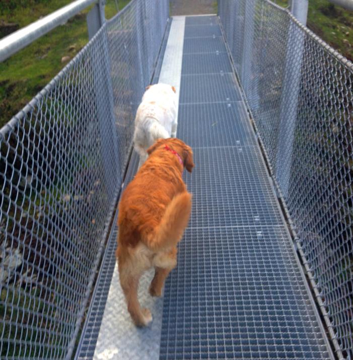 Auch Hunde lieben die Brücke. Sie trotten auf ihrer eigenen 'Hundespur' dahin.