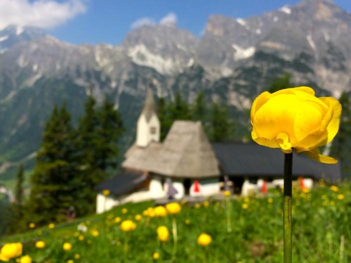 Wenn die wunderschönen Trollblumen blühen, ist die schönste Zeit auf St. Magdalena