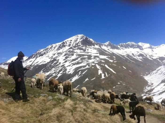 Und jährlich hoffen die Hirten, alle Schafe unversehrt ins Ötztal zu bringen.