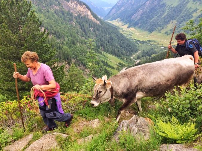 Immer mehr Bergbäuerinnen und Bergbauern sperren ihre Hoftüre zu.