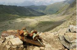 Ein vor 10 Jahren im Bergwerk geborgener Grubenhunt ist bis heute verschollen.
