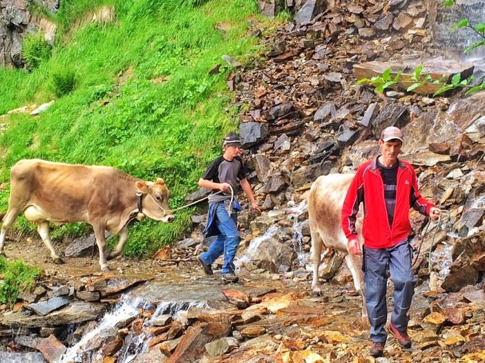 Gleich zwei 'Wasserfälle' liegen auf dem Weg von Vals zur Zeischalm. Führen sie wenig Wasser, ist die Almauffahrt ungefährlich.
