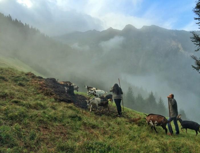 """""""Auf der Roas mit der Goaß"""" - Helgas Herde ist für Naturliebhaber_innen zu einer echten Attraktion im Valsertal geworden."""