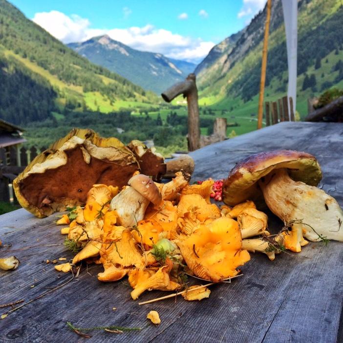 Der Herbst kündigt sich im Valsertal mit einer Vielzahl wunderbarer Pilze an. Quasi als Belohnung für meine Hirtentätigkeit. Denn nur allzuoft fand ich  die schönsten Exemplare dann, wenn ich mit den Geißen in aller Hergottsfrüh' auf die Weidegründe gezogen bin.