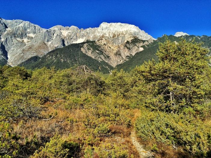Auf diesem kargen Kalkkegel am Fuß der Mieminger Berge wachsen und gedeihen die genügsamen Kranebittstauden. Und die Beeren? Die schmecken extrem stark und extrem gut.