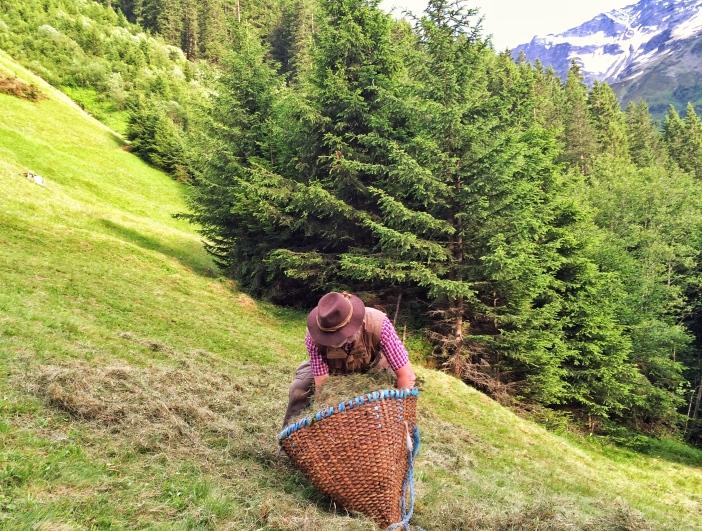 Nur die Pflege der uralten Bergmähder sichert das Überleben vieler Kräuter, darunter sehr viele Heilkräuter.
