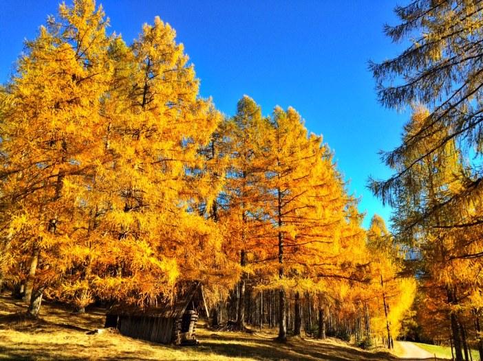 Die Goldwälder vom Holzleitensattel