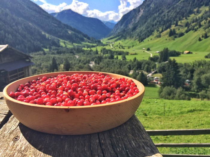 Preiselbeeren - eine Köstlichkeit aus dem Hochgebirge