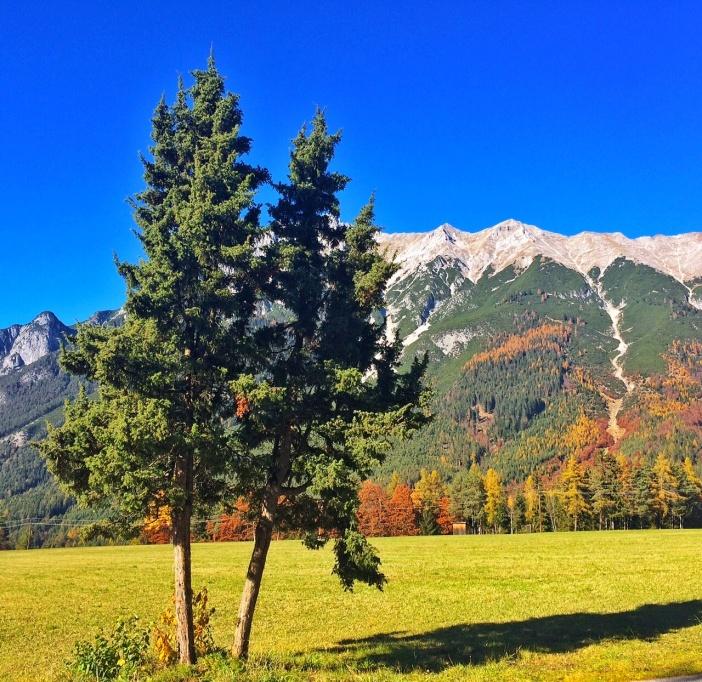 Der Wacholderbaum am Holzleitensattel ist wahrlich ein Prachtexemplar. Dahinter die Berge der Mieminger Kette.