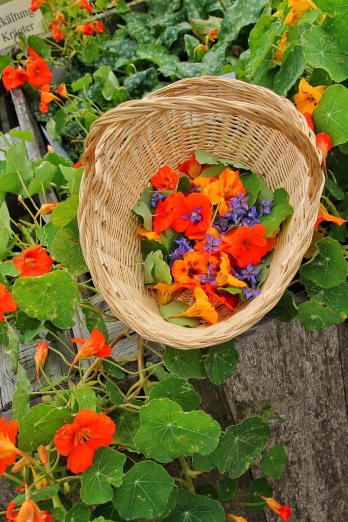 Für alle, die den Garten lieben: die Gartenfibel von Doris Weirather