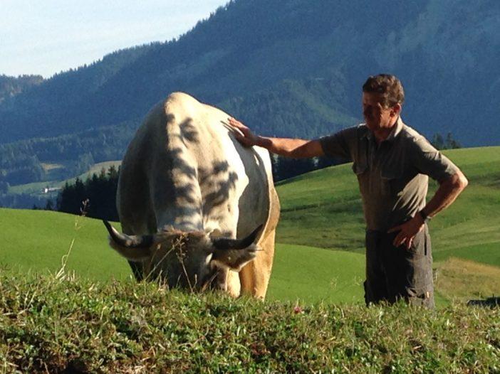 Eigentlich selbstverständlich: jedes Rind des Rohrhofs hat einen Namen. Das ist Gusti, das graue Tiroler Rind.