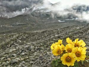 Blüten in der Steinwüste auf ungefähr 2.300 m Seehöhe.