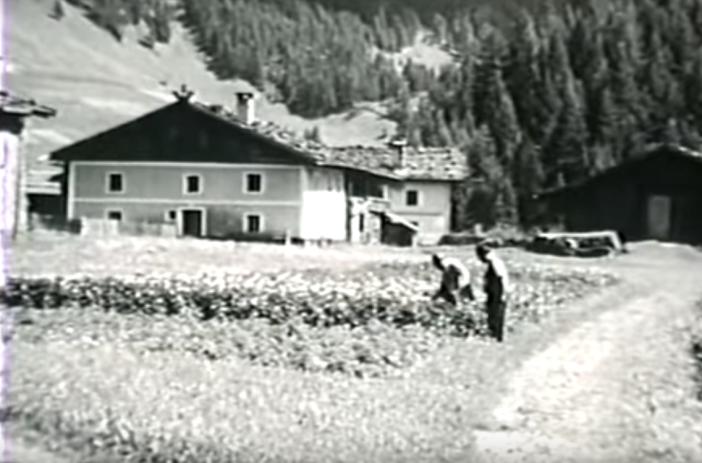 Schmirn hat eine lange Tradition im Kartoffelanbau.