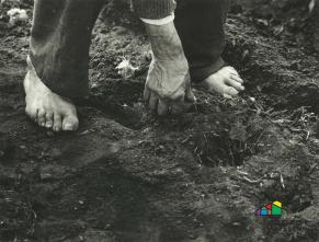 Erdäpfel stecken, Brand/Längenfeld (ohne Datum). @Sammlung Josef Öfner, Gedenkspeicher Ötztal.