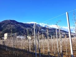 Eiserner Apfelvorhang Vinschgau Apfelplantage Kopie