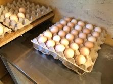 Eier auf Palette Psegghof