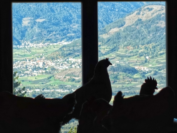 Hühnerstall Psegghof