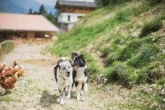 Pudelwohl fühlen sich auch die Hunde hier heroben. ©Psegghof