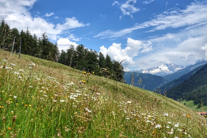 Obernberg Bergwiese