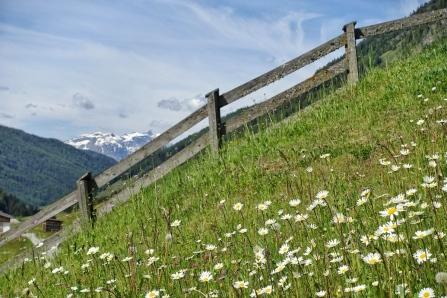 Blühende Wiese Kasern vier Kopie