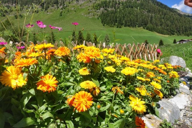 Ringelblumen, Kräutergarten Schmirn