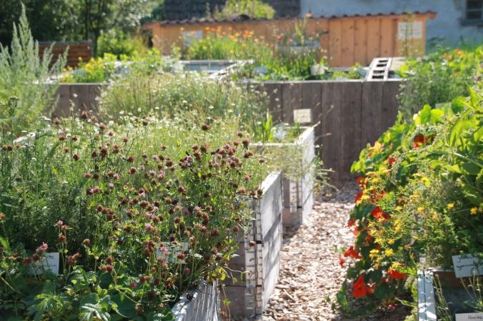 Kräutergarten von Weirather