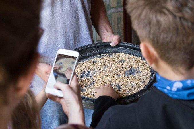 Hofbesucher füttern die Zieen mit Bruchgetreide